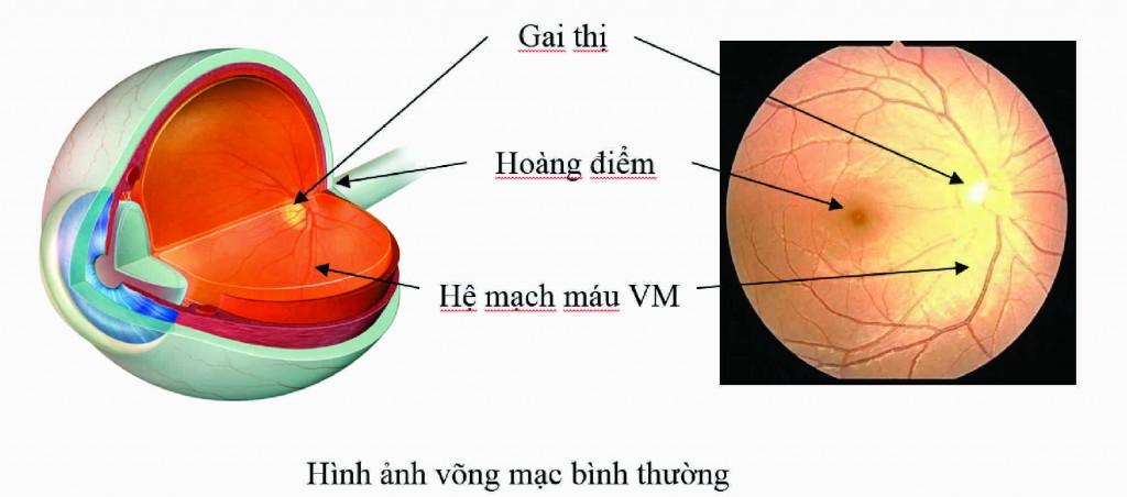 vong-mac-benh-vien-mat-quoc-te-dnd-128-bui-thi-xuan-hn-0969128128