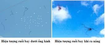 hiện tượng ruồi bay